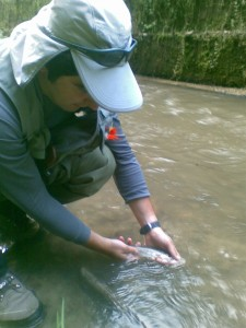 pastrav pe apa tulbure