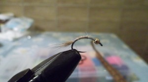 ureche de iepure - coada