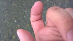 dry fly Ribnik