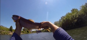 big trout on nimph vah river fly fishing