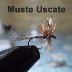 muste-uscate